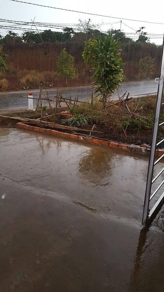 Hình ảnh trận mưa tại nhà của Phật Tử Như Khuyen Hoang ngày 25/3/2020