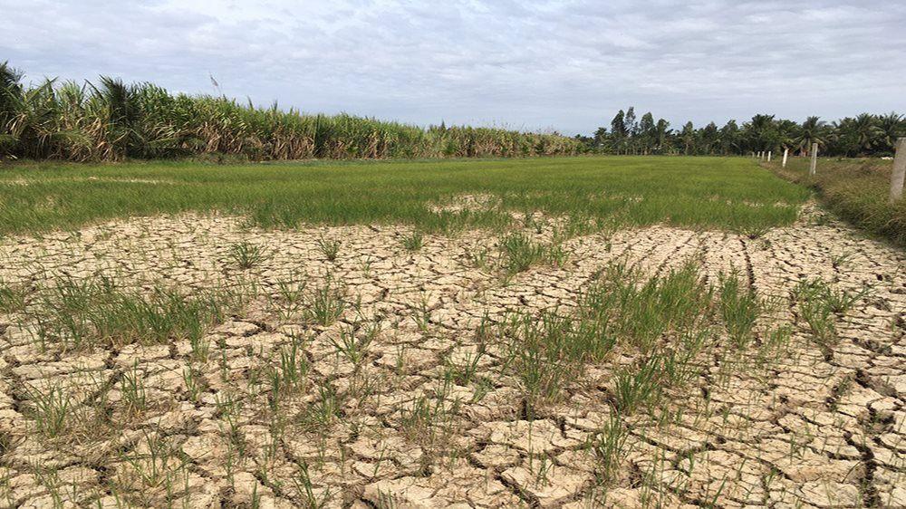 Tại các tỉnh Đồng Bằng Sông Cửu Long, đất nhiễm mặn, nứt nẻ, đồng ruộng khô cằn, sông ngòi cạn hết nước Nguồn: Internet