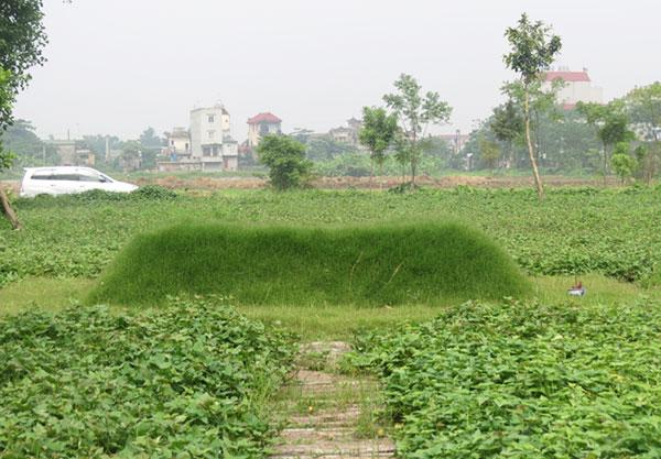Những ngôi mộ dần to lên, nở ra, cây cỏ xung quanh xanh mướt được nhận diện là hiện tượng mộ kết